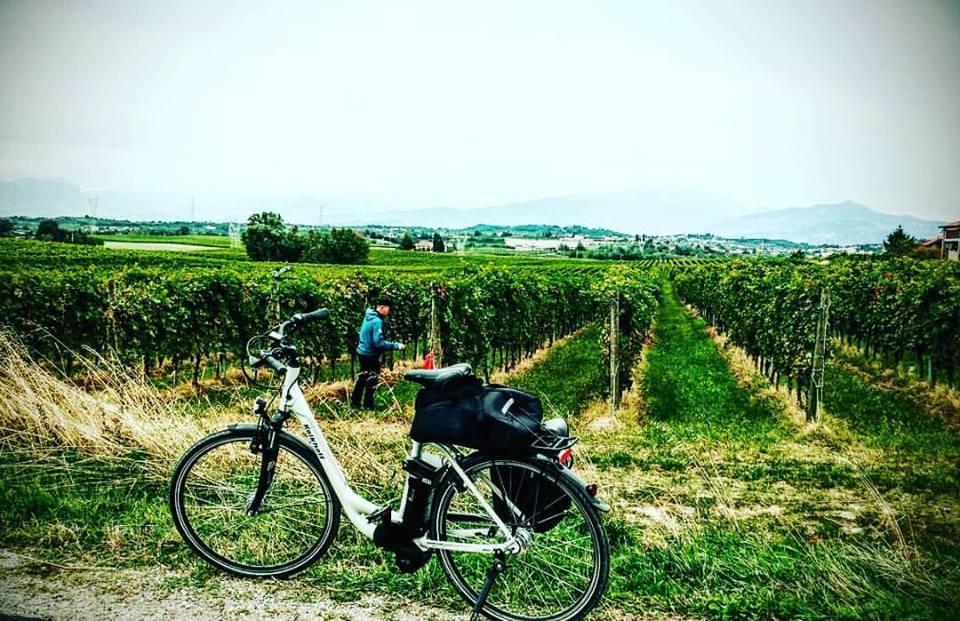 Bici e vigne